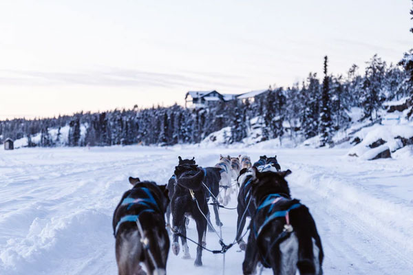 featured 5 Adventurous Activities You Can Do In Whitehorse Go dog sledding - 5 Adventurous Activities You Can Do In Whitehorse